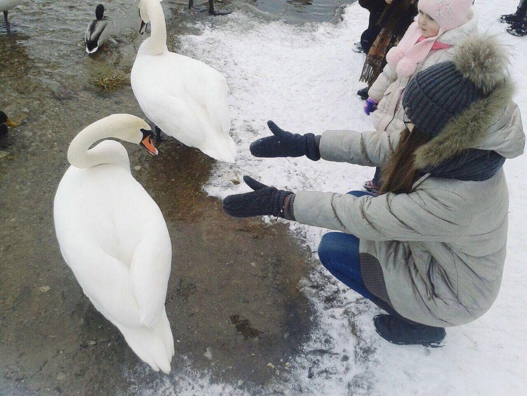 Hugging Winter My Friend Swan