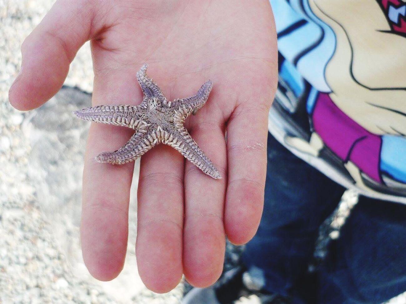 Holding One Animal Kalamata Beautiful Nature Starfish At Beach