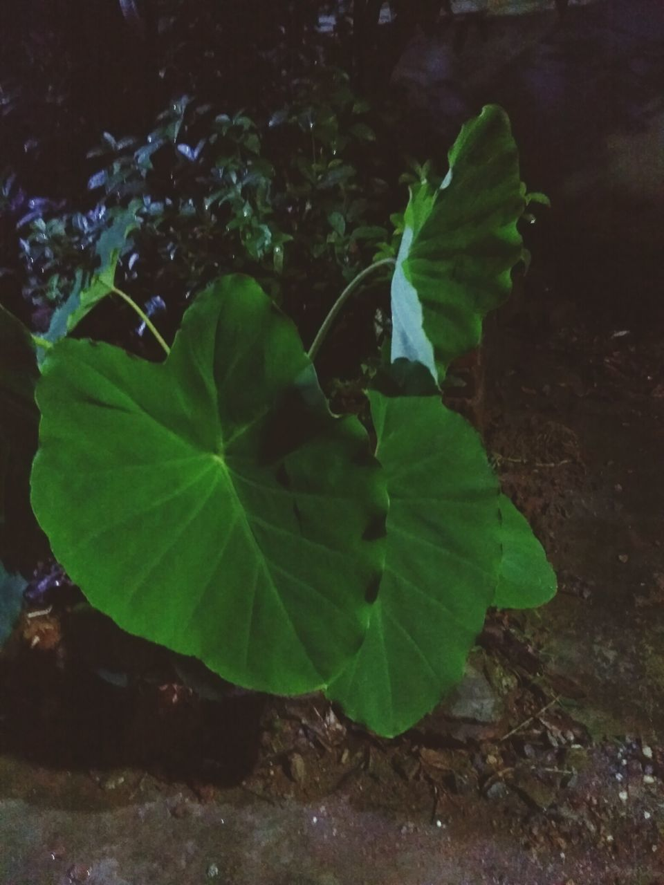 leaf, green color, growth, no people, nature, plant, outdoors, freshness, close-up, beauty in nature, day, fragility