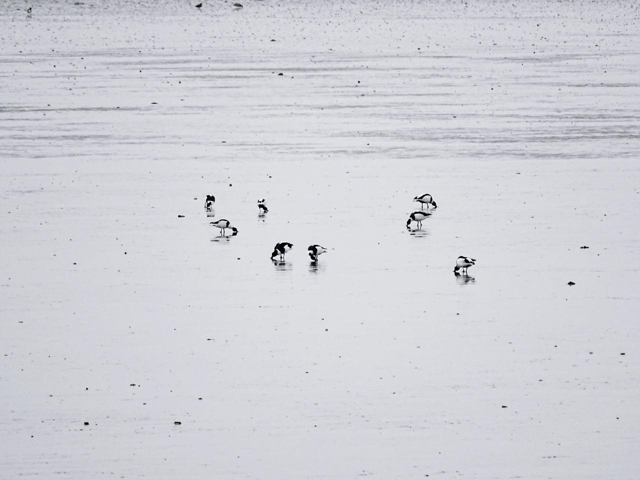 High Angle View Of Seagulls Perching At Shore