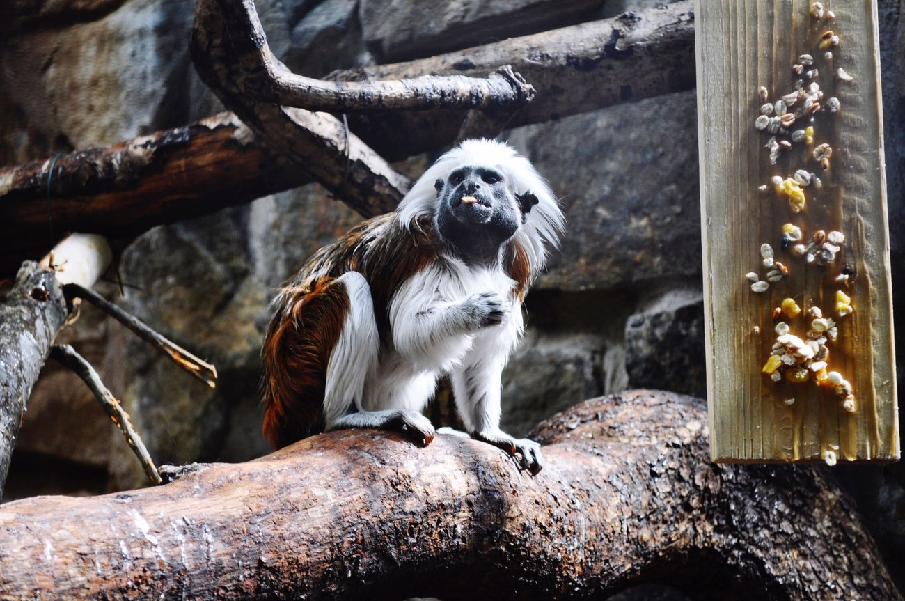 Animal Themes One Animal No People Mammal Monkey Outdoors Pets Day Sitting Domestic Animals Nature Close-up