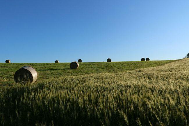 牧草ロール〜と麦畑〜☂☃☀☀☀ 牧草ロール 麦畑 牧草ロール 麦畑 Roll Bale Wheat Field