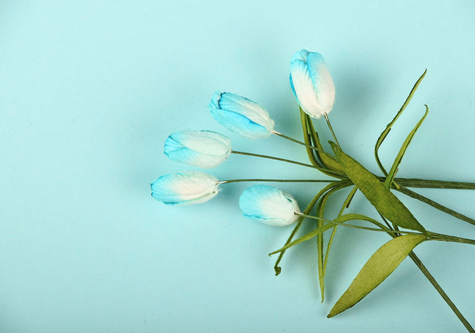 Beautiful stock photos of flowers, Beauty In Nature, Blue Background, Close-Up, Copy Space