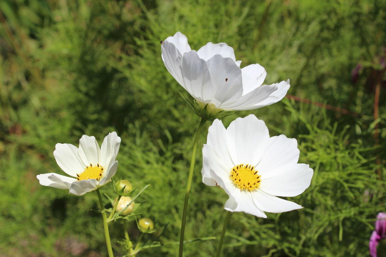 Botany Flowerporn Flowerphoto Flowerstagram Flowerhead Flowers Flowers,Plants & Garden Flowers_collection Focus On Foreground South Africa Stellenbosch White Flowers