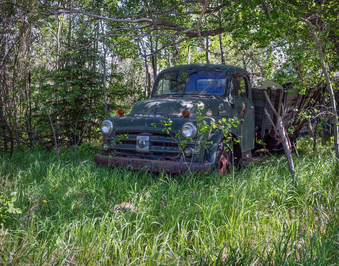Green Truck Abandoned Car Damaged Day Grass Green Color Growth Land Vehicle Mode Of Transport Nature No People Outdoors Transportation Tree