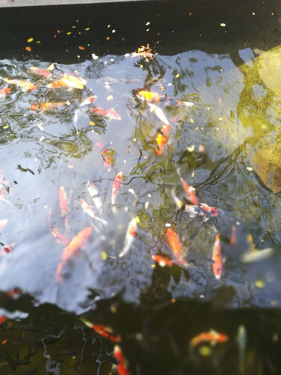 Fish... Water Outdoors Day Nature Beauty In Nature Green Color Plant Kaoyai Sky Fishing Time Fishes