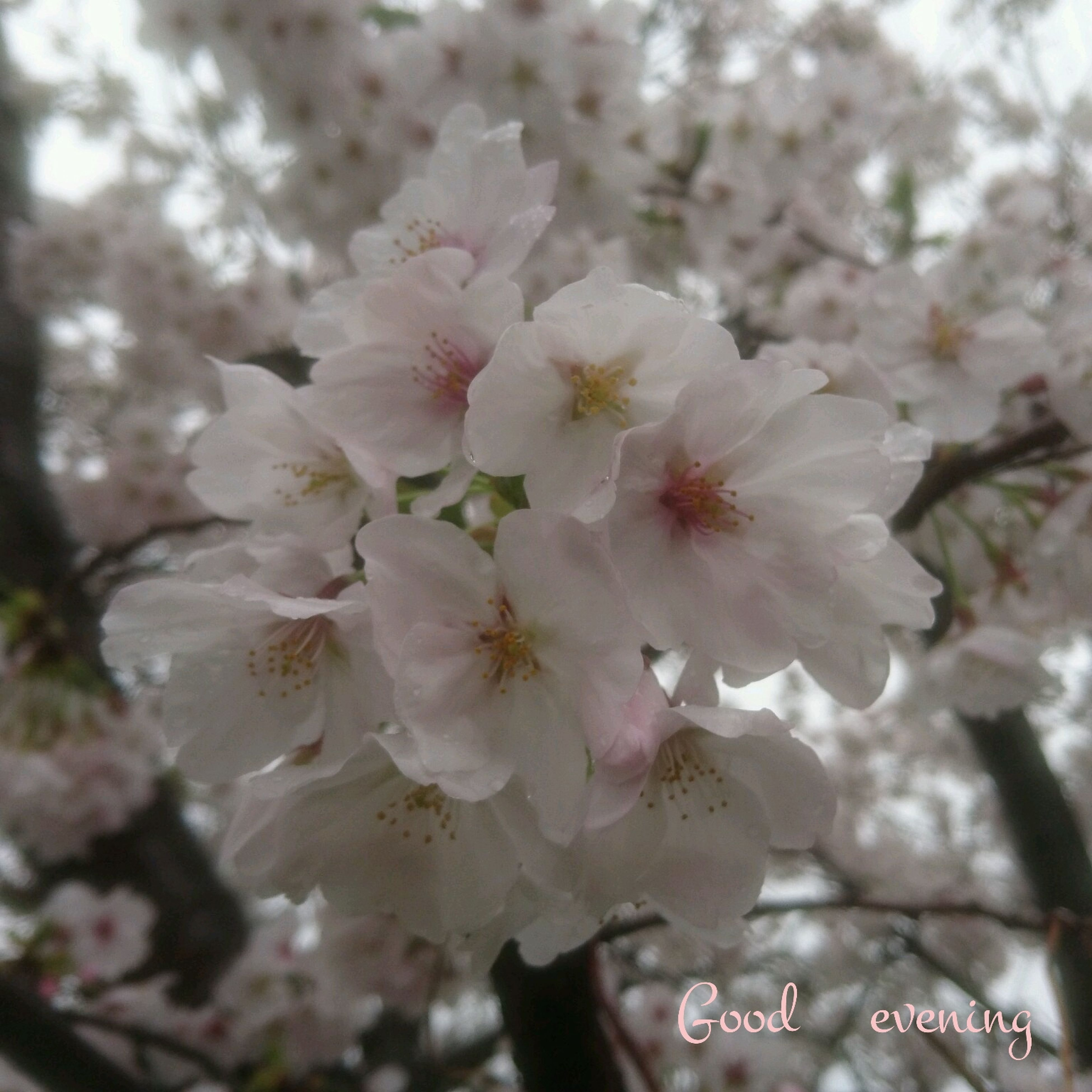 flower, growth, nature, fragility, tree, beauty in nature, close-up, springtime, blossom, freshness, no people, outdoors, day, flower head, plum blossom