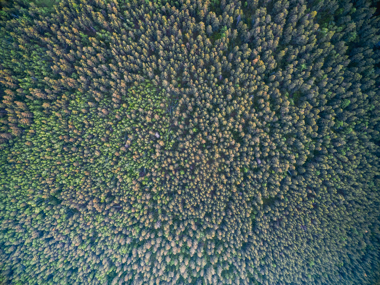 Aerial Aerial View Backgrounds Drone  Dronephotography Flying High Surface Texture