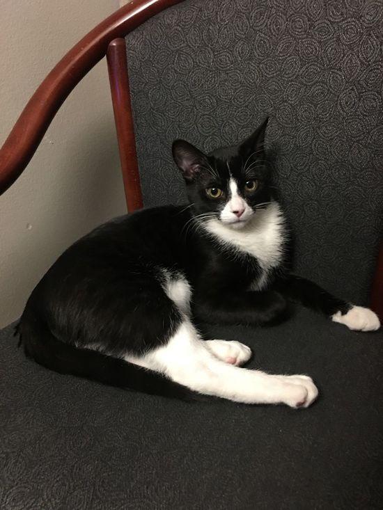 Cyrus the cat Cat Kitty Kittens Kitten 🐱 Kitten Relaxing Kittylovers One Animal Feline Kittylover