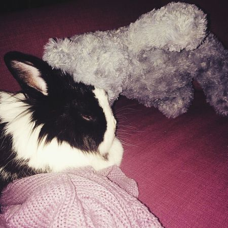 Cuddlebuddy Falling In Love Shes Beautiful Shesperfect Mygirl♥ Bunny Love Thisismyworld Shesmine Lovehersomuch Kiss :*
