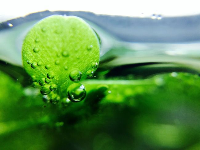 Water Drop Green Color Close-up Nature No People Focus On Foreground Day Beauty In Nature Outdoors Leaf Freshness Growth Plant Fragility Animal Themes Sky