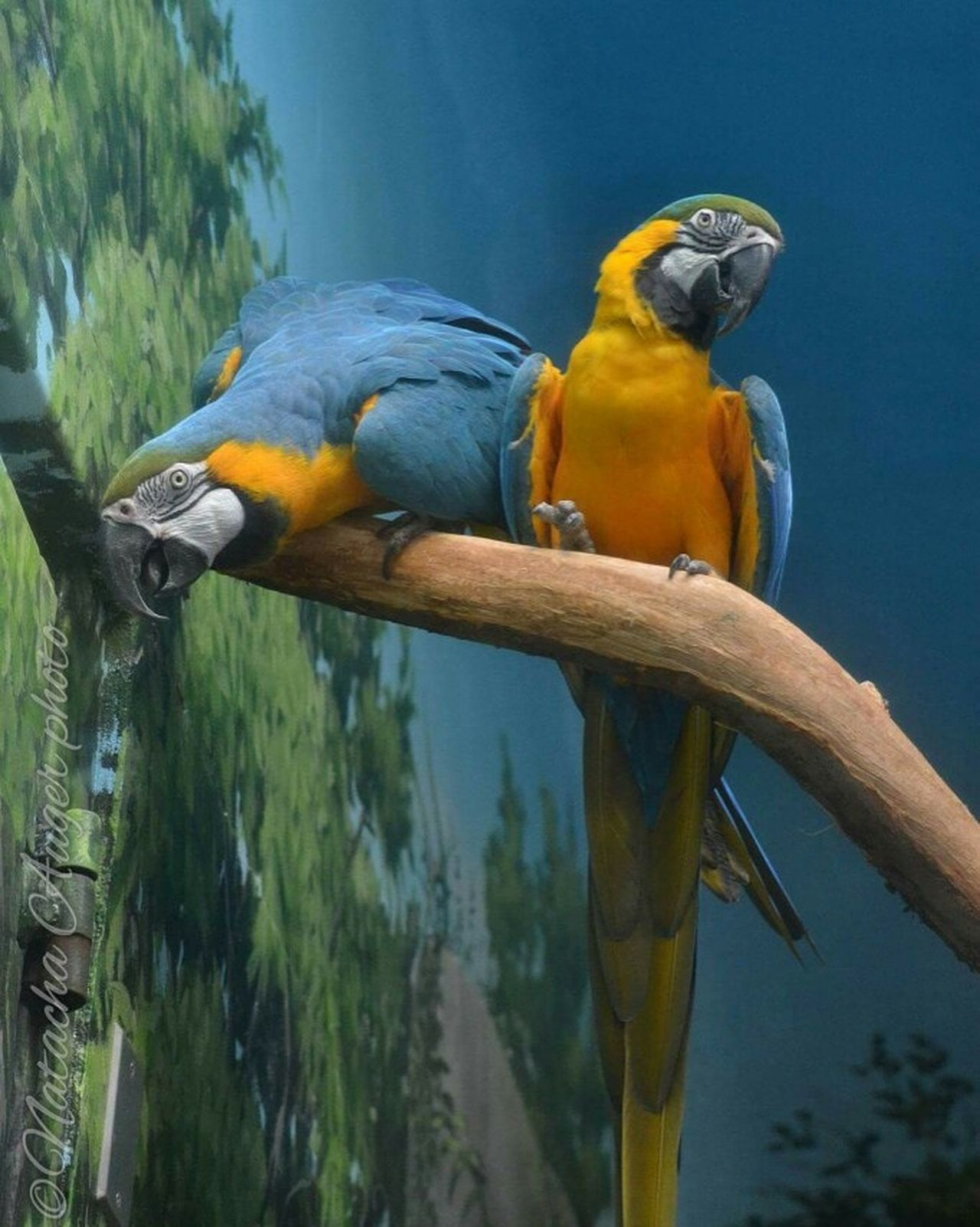 MacawParrot Macaw, Bird Macaw Parrot Macaw Nophotoshop No Filter, No Edit, Just Photography Nikonphotography Nikon Bird Zoo Granby Zoo Zoodegranby Animal Photography Animal Themes Animal Lover Bird Photography BirdLovers Zoo Animals