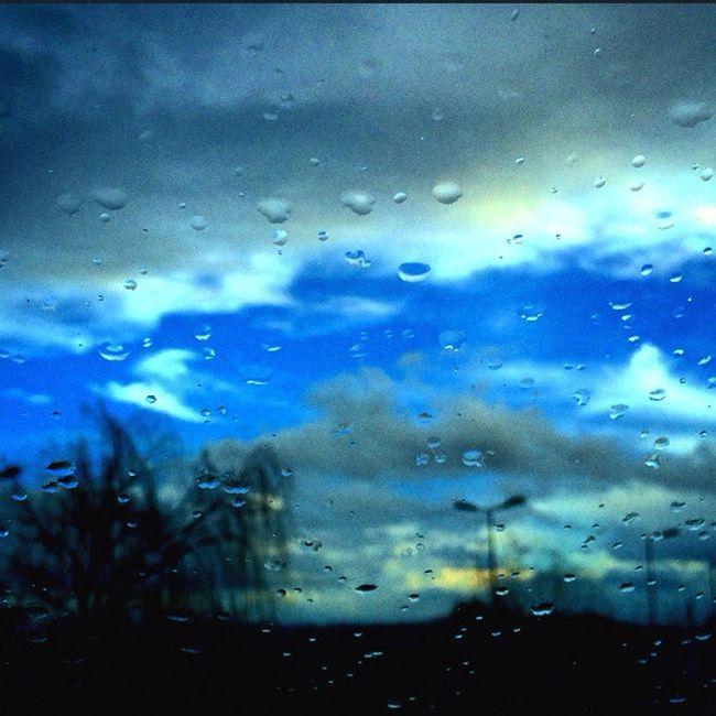 Rain Trees Blue Blue Sky Taking Photos