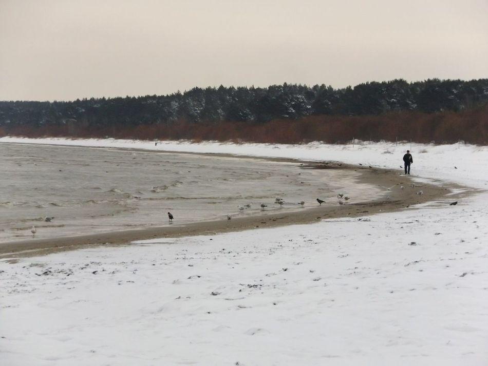 JurmalaBeach Latvia One Person Nature Outdoors Snow❄⛄ Baltics Baltic Sea Only Men Sand Beach Morning Walk Wave Seagull Bird Landscape
