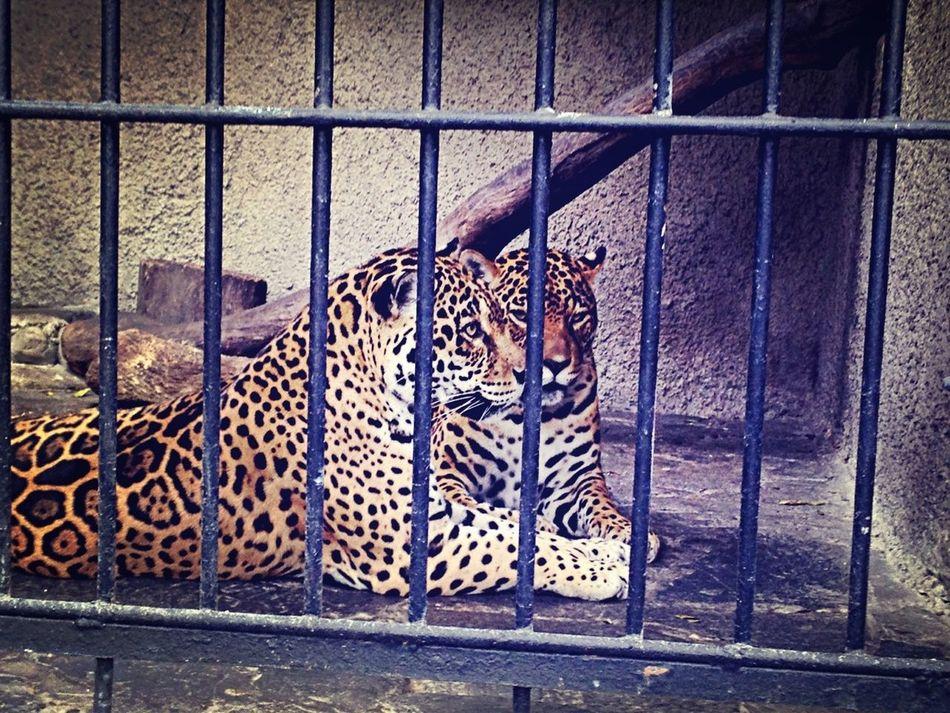 #lol #jaguares