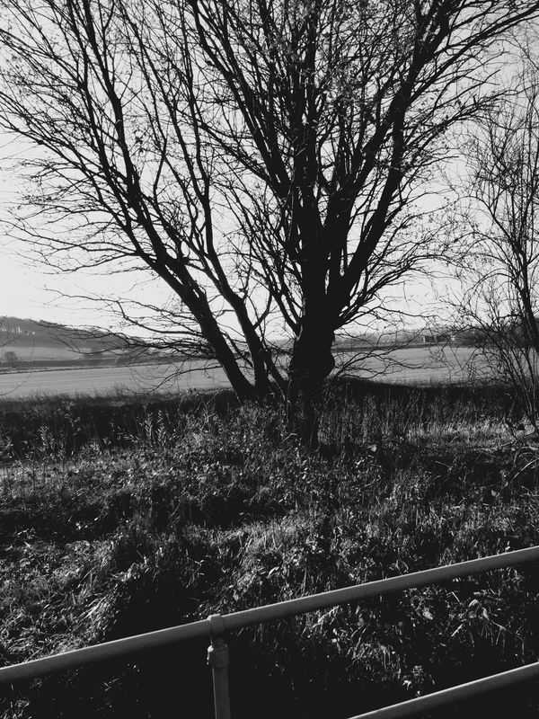 Blackandwhite Tree Nature From My Point Of View