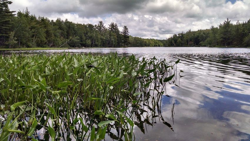 Taken in the Adirondack Mountains of New York. Relaxing Check This Out Adirondack , New York, USA Adirondack Mountains Beauty In Nature Beautiful Lillypads Lake Lake View Water Reflections