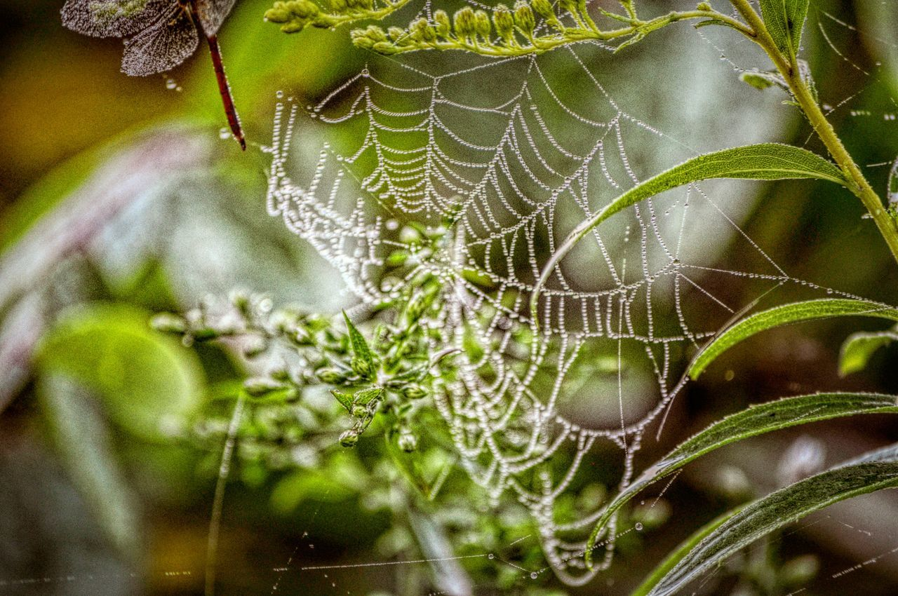 Hanging Out Taking Photos Enjoying Life Share Your Adventure My Best Photo 2015 Nature On Your Doorstep Upstate New York Spidersweb Spider Webs