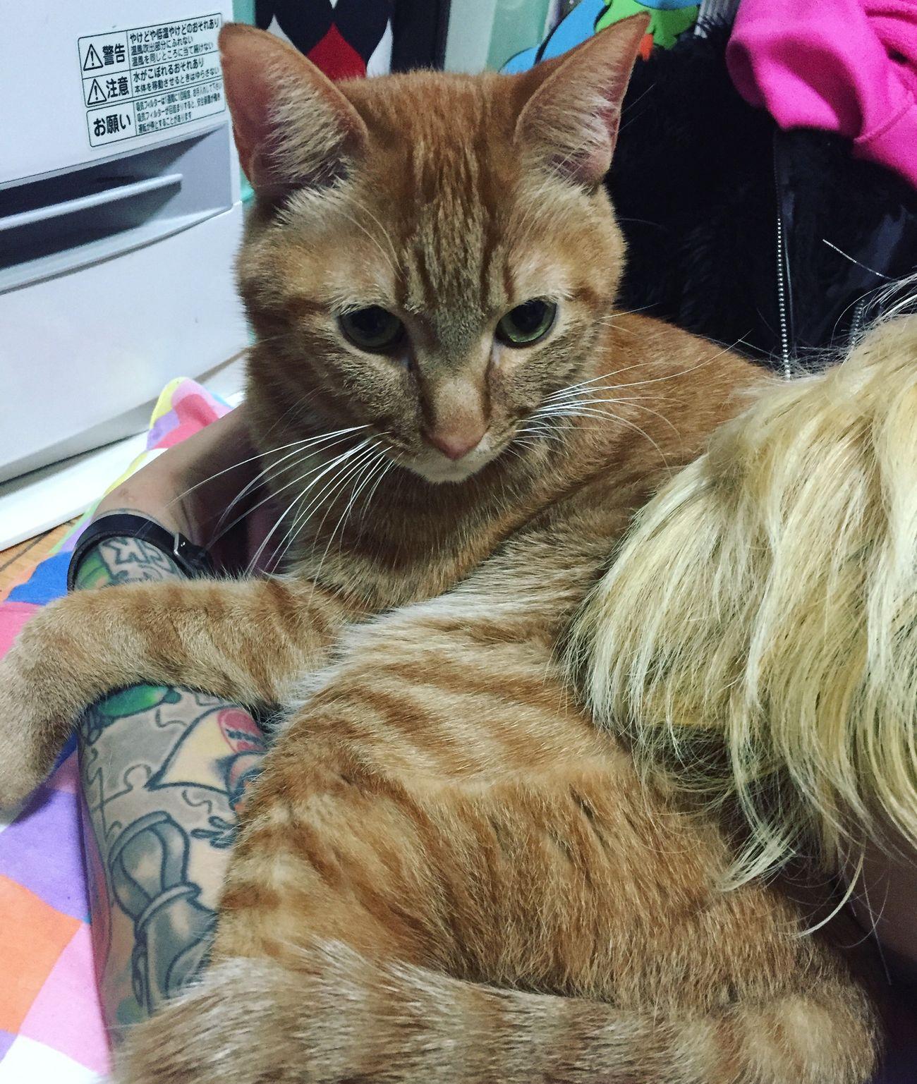 Tattoos KOTARO Nyan Tiger Cute Pets Pet Cute KAWAII Katze Cat Meow Tattoo Blonde Ink