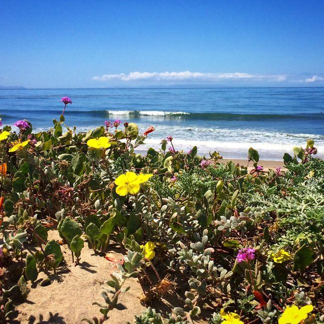 The Great Outdoors - 2016 EyeEm Awards Gaviotacoast Goleta California Nature Outdoors Pacific Ocean Ocean View Beach Ocean