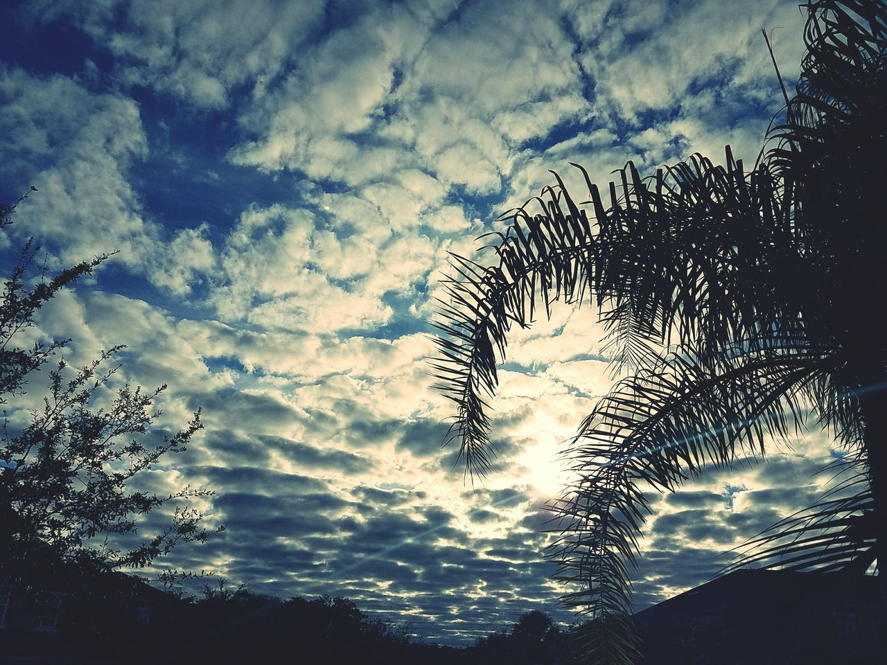 Nature Cloud - Sky Sky Tree No People Backgrounds Beauty In Nature Desaturated Outdoors Day Sunrise_sunsets_aroundworld Sunrise And Clouds Weekly Eyeem Welcomeweekly Weeklyphoto The Week Of Eyeem People And Places Weekly_feature Nature S7 Edge S7edgephotography