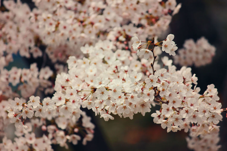 Beauty In Nature Blooming Blossom Branch Close-up Flower Fragility Freshness Growth Nature No People Pink Color Springtime Tree