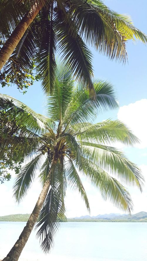Palm Trees Secluded Beach Beach Life Water And Sky Collection Fiji Islands Chilaxing  Natural Beauty Getting Away From It All Love Nature