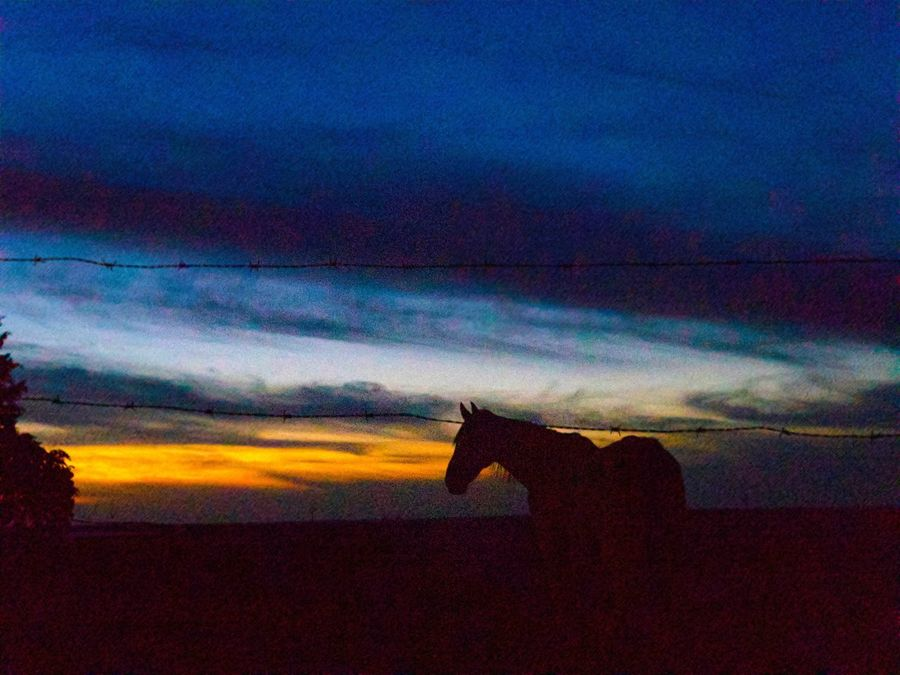 Love In Love Sunset Silhouette Sky Cloud - Sky Nature Scenics Beauty In Nature Animal Themes Mammal Rural Scene Countryside Environment Horse Horse Silhouette Barbed Wire Sunset_collection Sunset Silhouettes Tales Dreaming Hope Night Landscape Rural The Week On EyeEm
