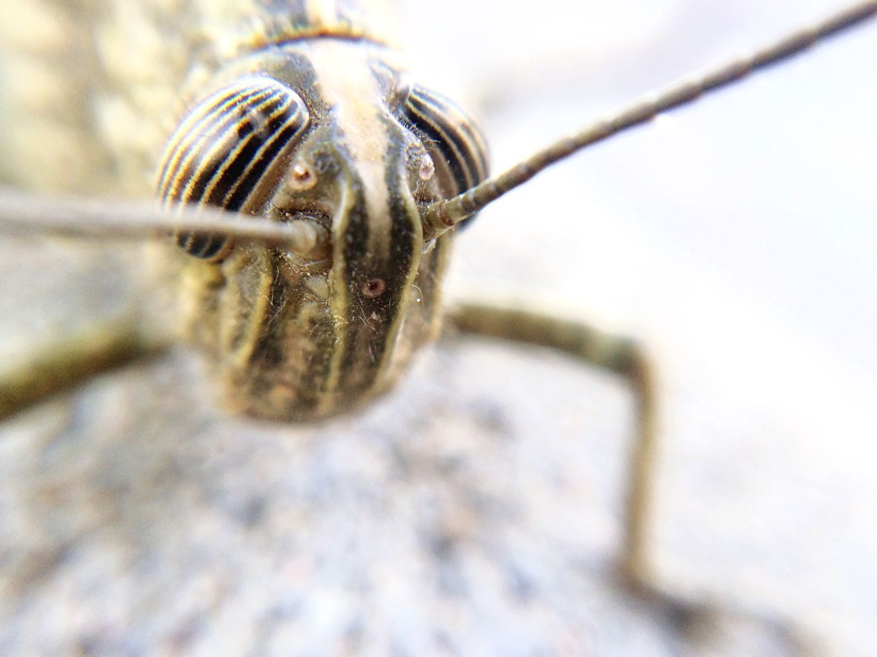 Beautiful stock photos of macro, Animal Head, Antennae, Day, Extreme Close Up