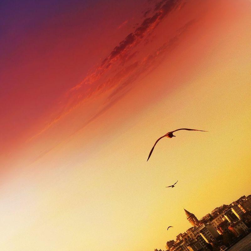 Seagulls by Atilla Öztürk