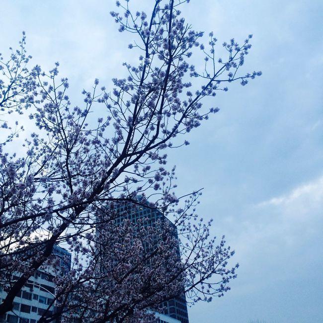 여의도한강공원 Flower