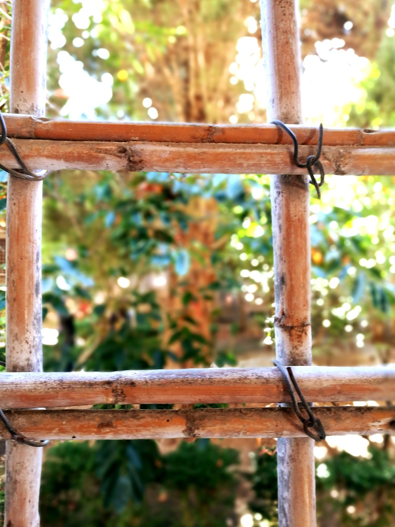 Trapped behind the fence of live ... Focus On Foreground Wood - Material Wooden Fence Window Trapped Inside Cloister Garden Close-up No People Prison