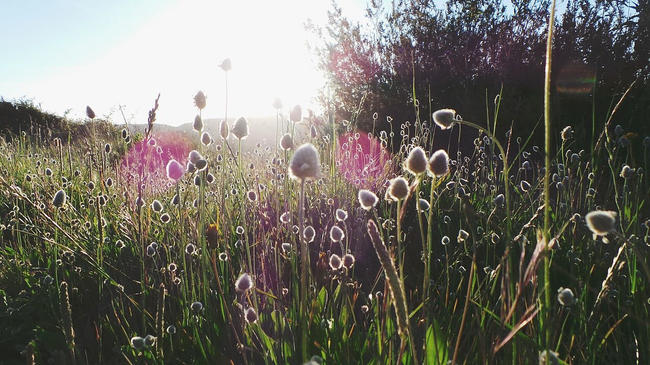 Growth Nature Plant Outdoors Beauty In Nature Field Tranquility Sky