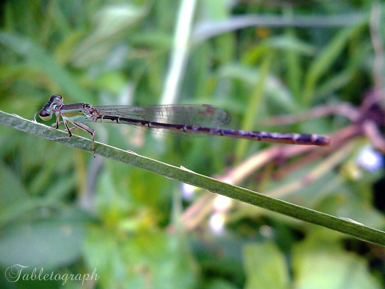 insect, animal themes, animals in the wild, focus on foreground, one animal, damselfly, day, no people, nature, outdoors, animal wildlife, close-up, plant, grass