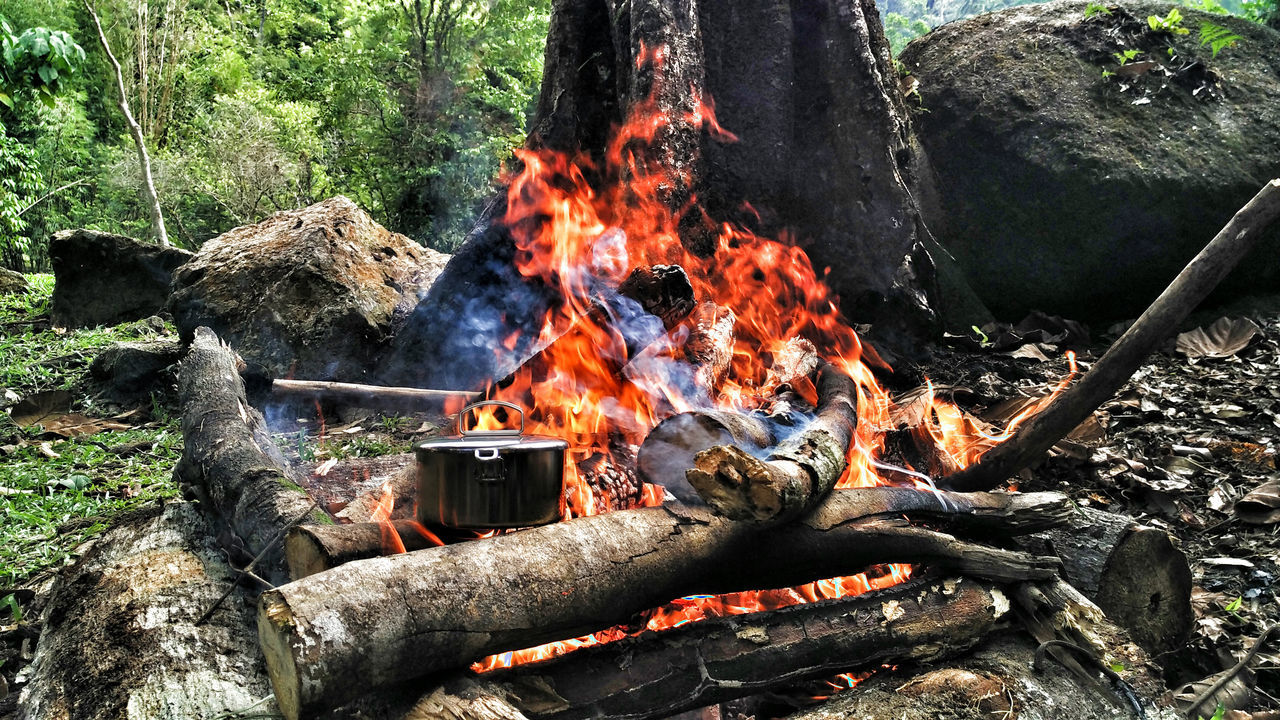 burning, flame, heat - temperature, no people, tree, outdoors, day, bonfire, wood - material, motion, close-up