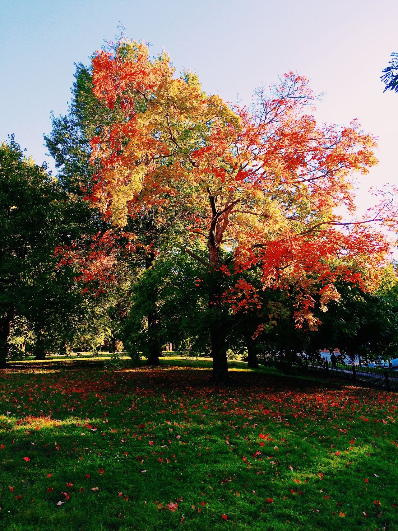 Beautiful stock photos of park, Autumn, Day, Grass, Lush Foliage