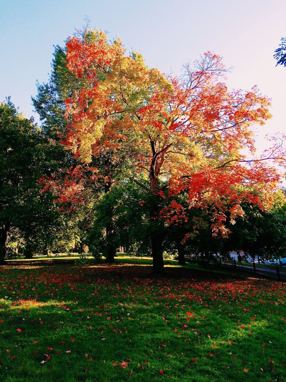 Beautiful stock photos of park, Autumn, Day, Grass, Lush Foliage