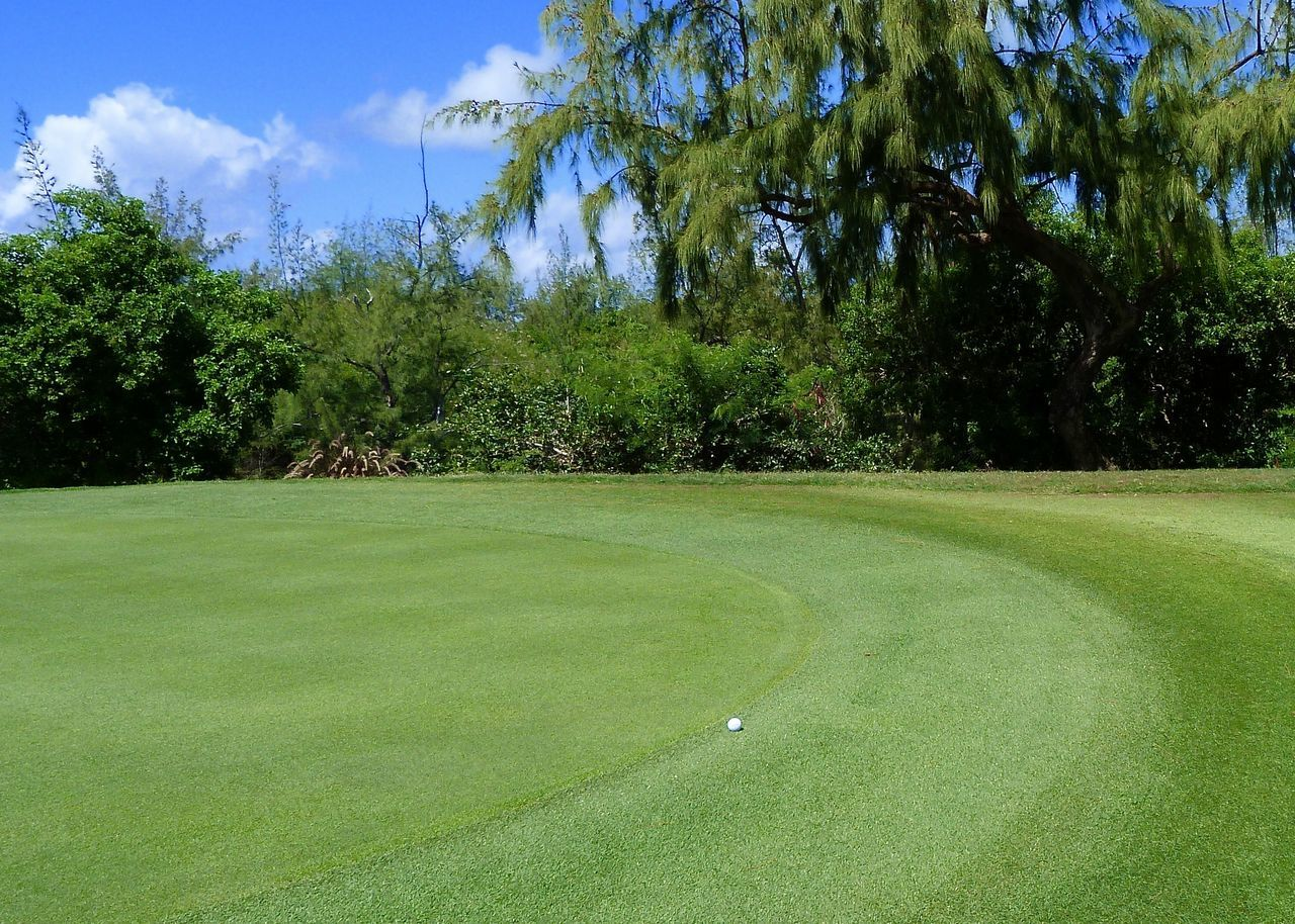 golf course, mauritius -greenery - Beauty In Nature Coastal Colors Environment Golf Golf Course Golfball Golfing Grass Green Green - Golf Course Green Color Greenery Growth Holiday Lawn Light Mauritius Nature Outdoors Sport Tranquil Scene Tree Île Aux Cerfs
