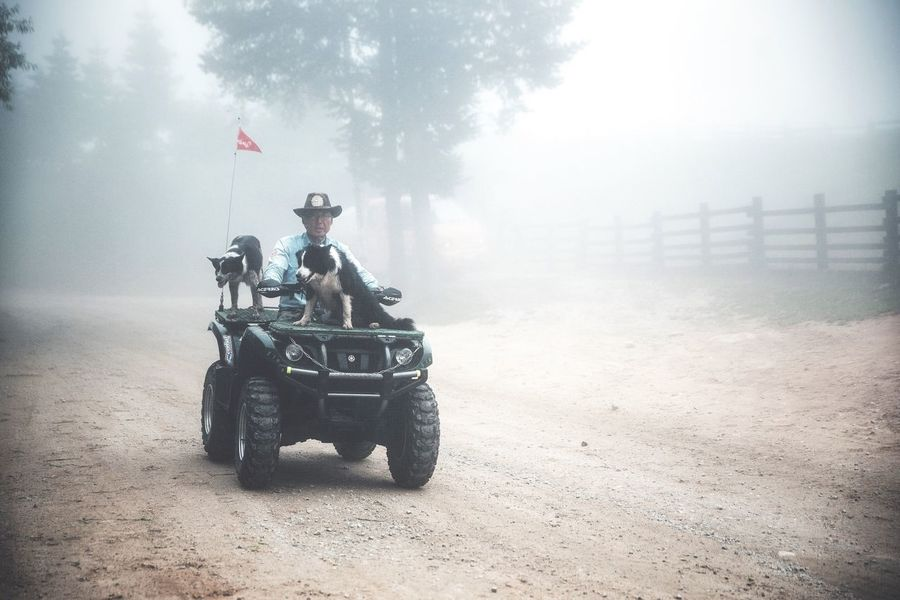 Sheep dogs getting a ride home Hello World Misty Mountains  Foggy Fog Landscape In The Mist Dogs Border Collie Sheep Dogs Mountain Moody Road Animals Ranch South Korea Tranquil Scene On The Way Showcase July Miles Away