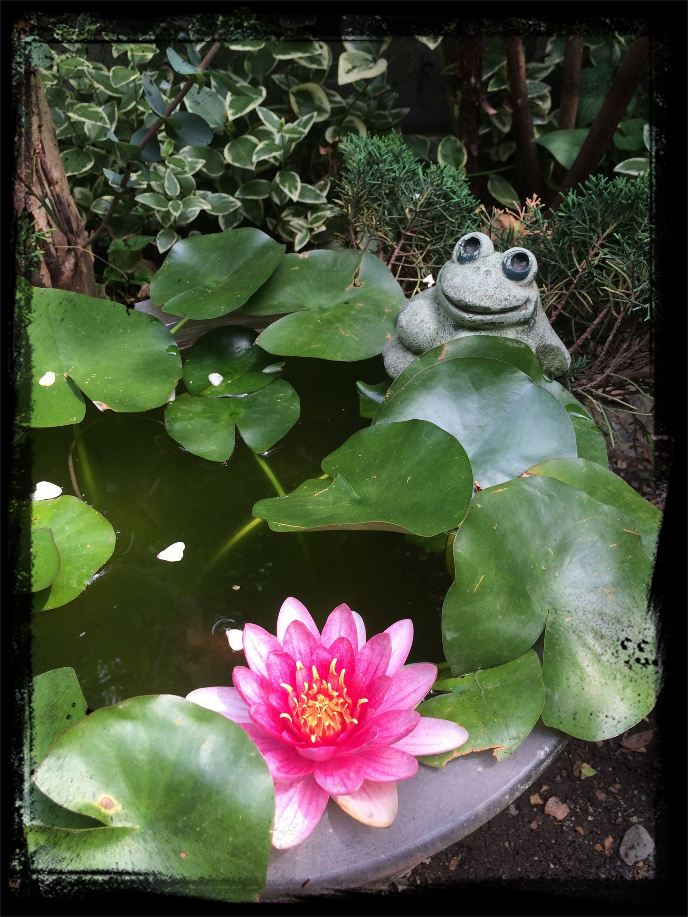 leaf, flower, freshness, water, fragility, transfer print, growth, petal, plant, pond, green color, high angle view, beauty in nature, nature, close-up, water lily, floating on water, auto post production filter, flower head, wet