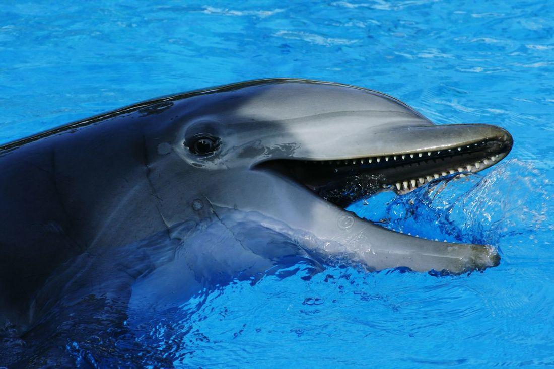 Las Vegas Dolphins Secret Garden The Mirage