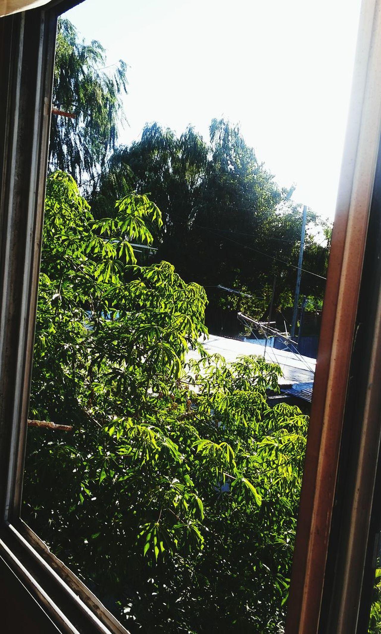 . Despues De La Lluvia Cool Beauty In Nature Day Verde Ojas Sol Plantas Plants 🌱 Plants .