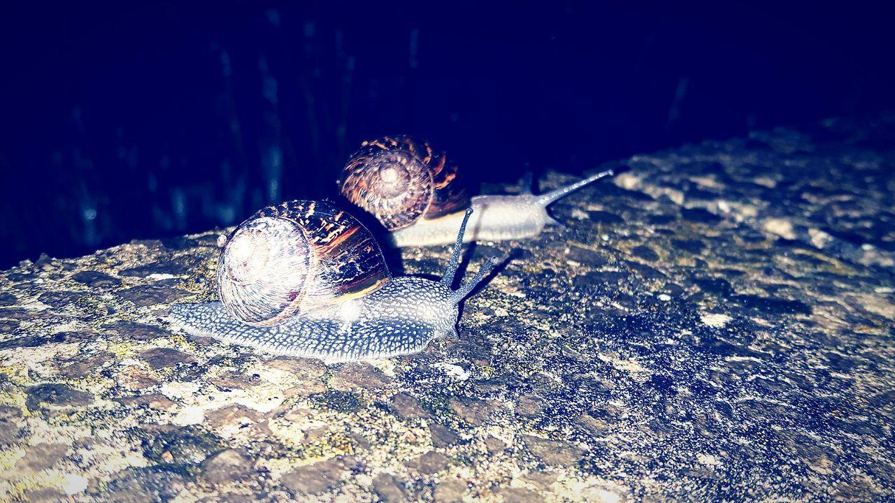 Snail Racing At Night. Snail Magic Eeyem Snails Race To Win. Wild Snails Nature And Snails Nature Is Amazing.
