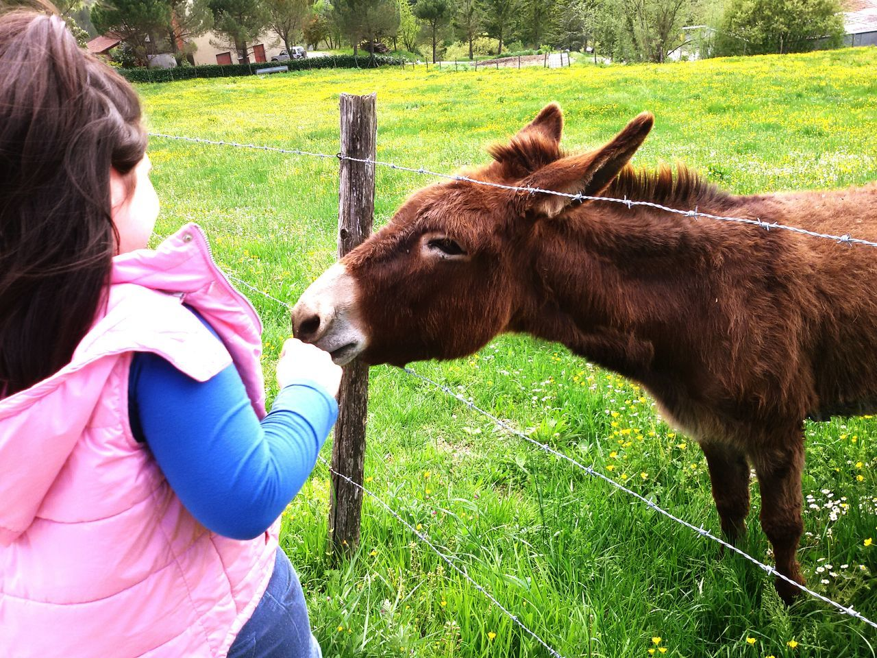 Rear View Of Girl Standing By Donkey At Farm