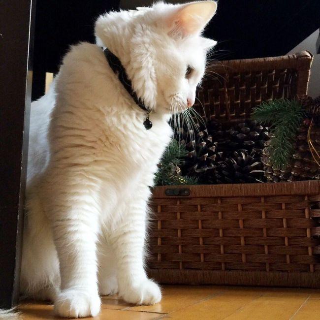 Aybalam Cat Love Lovecats Kedi White Aybala
