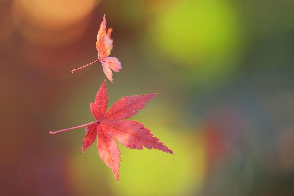 Maple Leaf Fallen Leaves もみじ Spider Silk Beauty In Nature EyeEm Nature Lover EyeEm Best Shots EOS7DMarkII