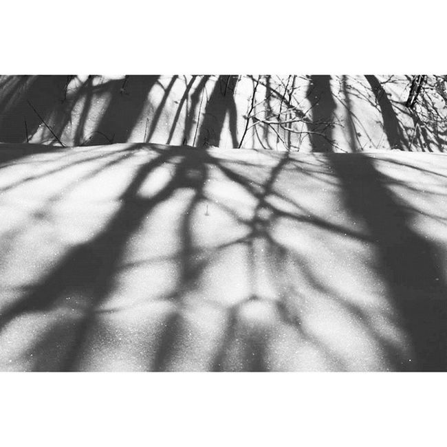 Loves_reflections Lr_bnwtrees Snow Tree_captures bestnatureshot appalachia allnatureshots tree_captures artsyheaven blacknwhite_perfection bns_trees bns_reflections frostopia fiftyshades_of_nature gotowv highlandscenichighway igers_of_wv icu_usa ipulledoverforthis ig_shutterbugs ig_great_shots_usa jj_blackwhite love_natura bnw_captures mountains westvirginia wv_igers naturehippys wv_nature