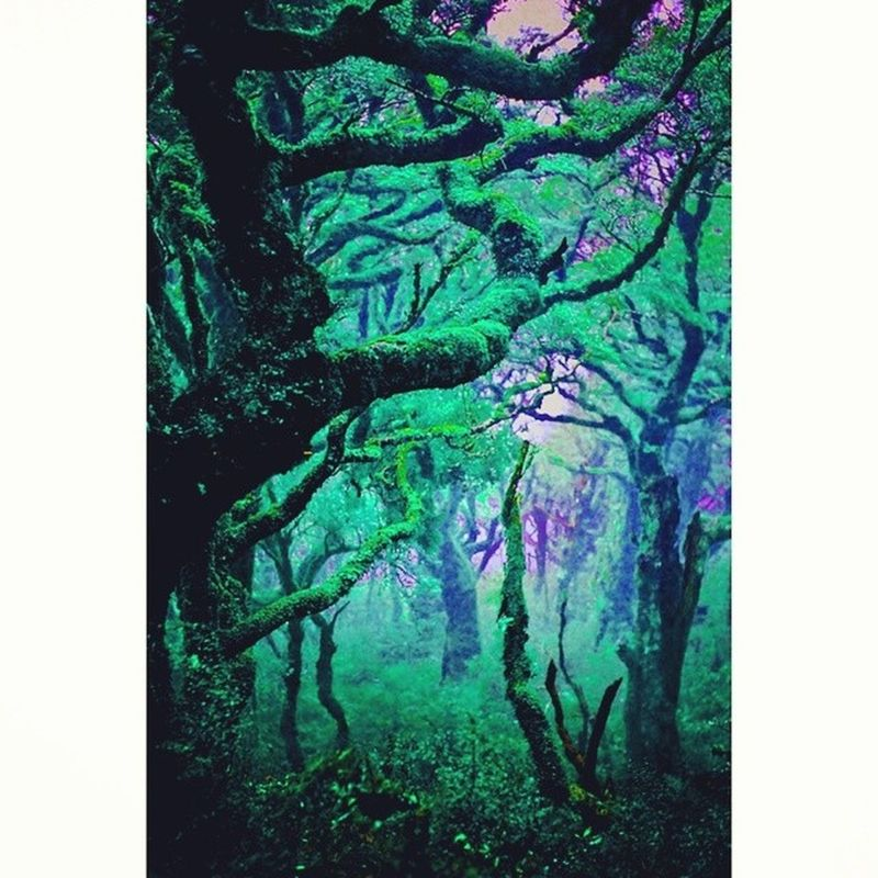 I need to be there right now. Pleiadian Starseed Indigochildren Lightworker Interdimensional Psychedelic Hippie Peace Love Understanding Accepting Knowledge UnconditionalLove Ascension Mindunleashed Mindexpansion Chakras Meditation Relaxation Shamanism Shaman Spirituality Followforfollow Followme Likeit likes doubletap instafame