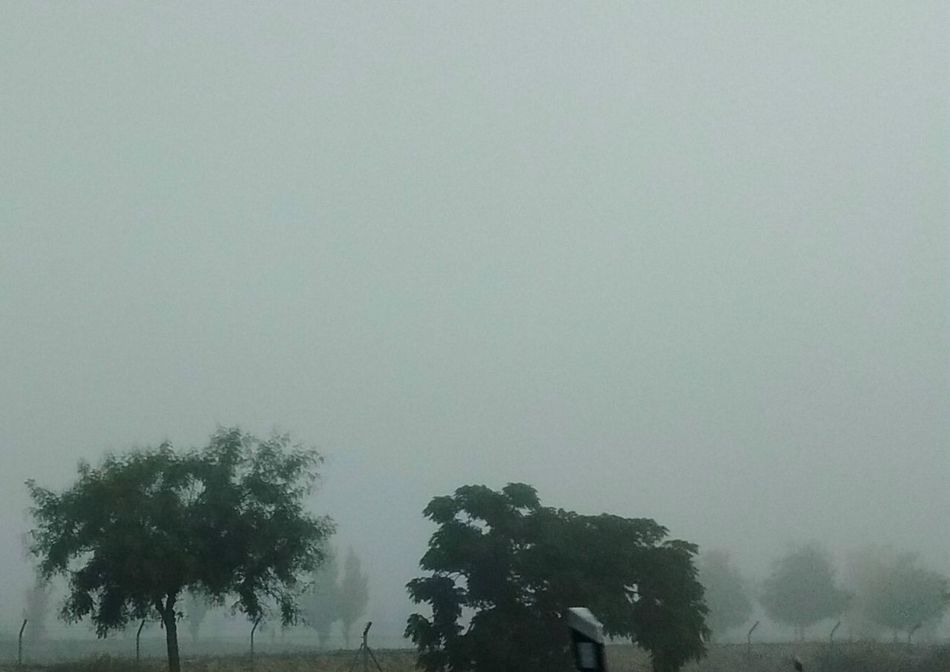 Niebla. Tree Fog Outdoors No People Nature Silhouette Beauty In Nature Sky Landscape Day Scenics Niebla Niebla Matinal Nieblas Boira