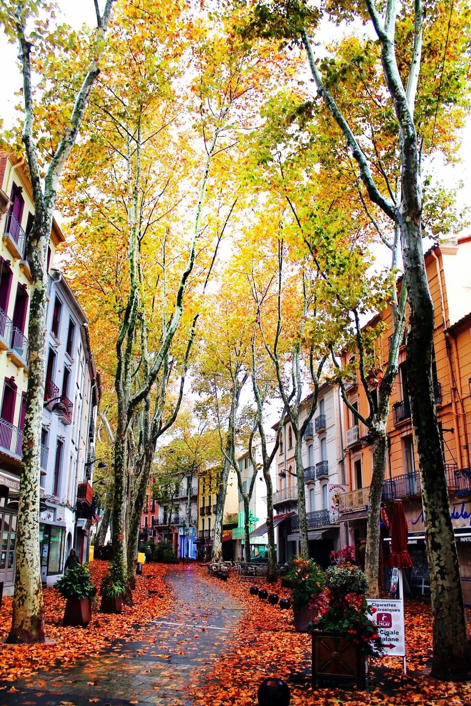 Ceret Automne Vallespir Països Catalans First Eyeem Photo